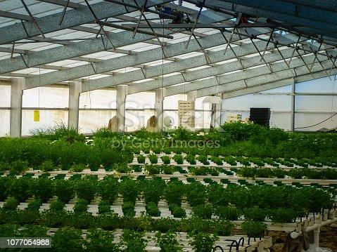1047941544istockphoto Interior of a greenhouse 1077054988