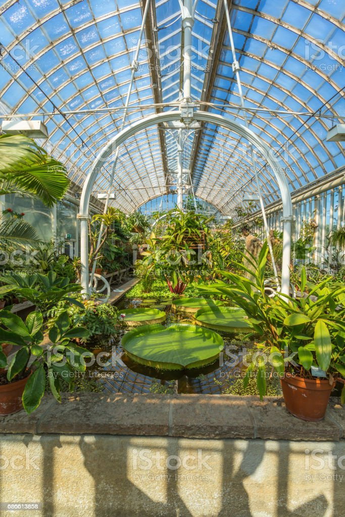 Interior of an old greenhouse with plants and a pond royalty-free stock photo
