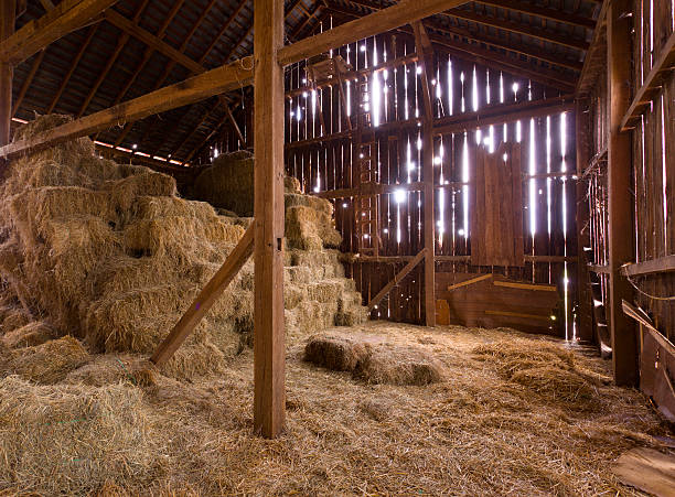 Interior of old barn with straw bales HDR image of an old Barn with the sun streaming from outside and straw and hay on the floor of the hayloft hay stock pictures, royalty-free photos & images