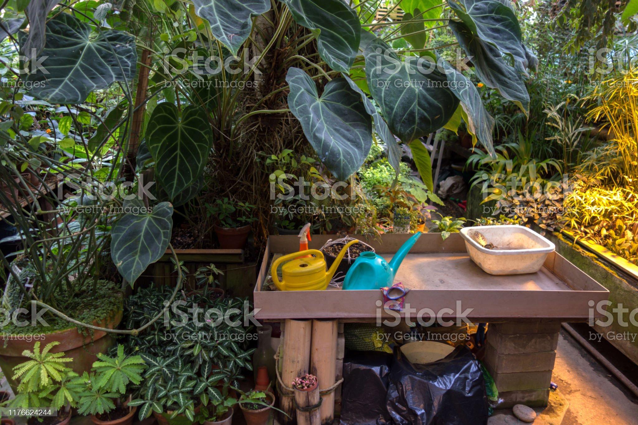 Интерьер тропической оранжереи