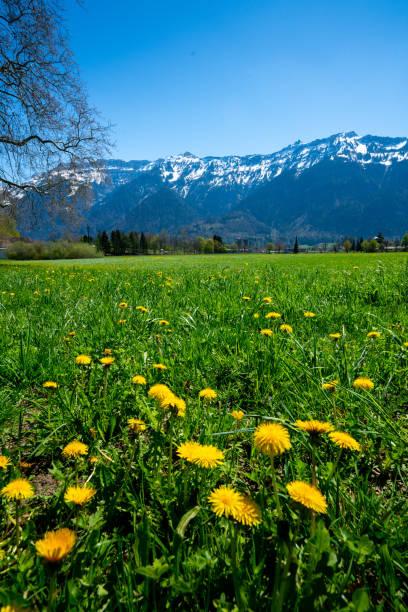 Interlaken Stadt und Jungfrau, Schweiz – Foto