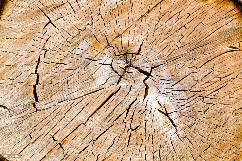 Wooden texture from the tree, plum-tree, growth rings.\'nDetail of the...