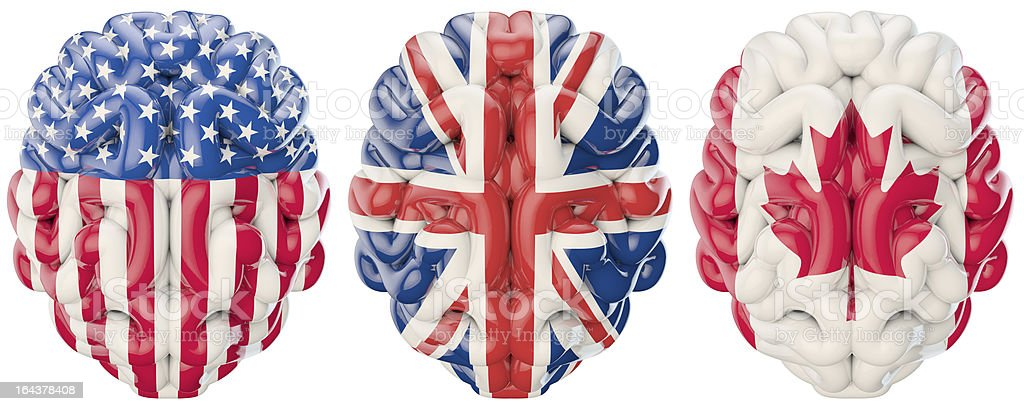 International brains stock photo