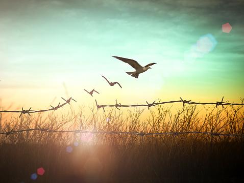 鳥が旅立つ写真 アインの集客マーケティングブログ