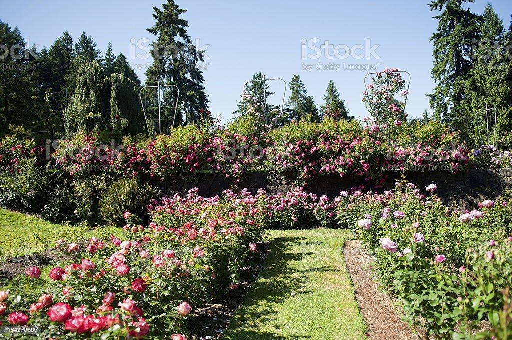 International Rose Test Garden In Portland Stock Photo Download