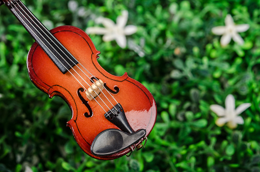 istock International violin day 904545088