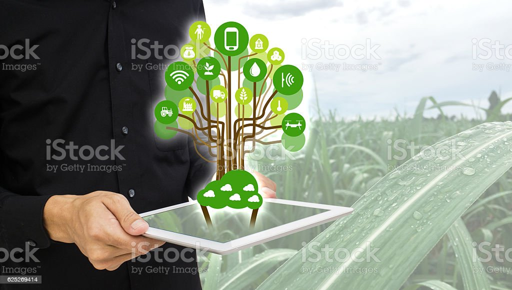 Internet of things(agriculture concept),smart farming, smart agriculture - foto de stock