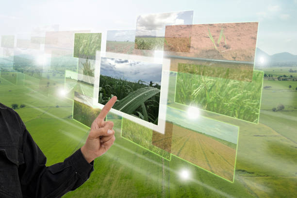 Internet of things(agriculture concept),smart farming,industrial agriculture. stock photo