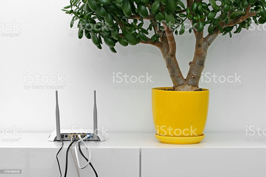 internet router and flower pot on white shelf stock photo