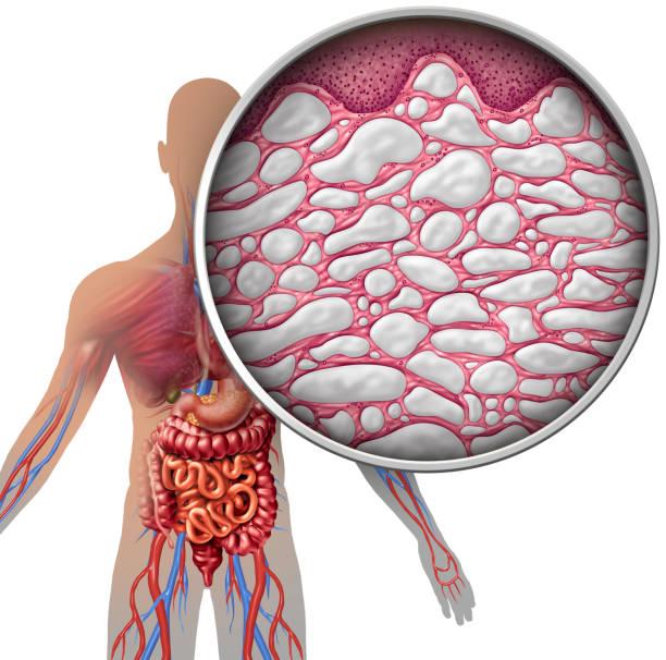 interstitium human body anatomy - tessuto umano foto e immagini stock