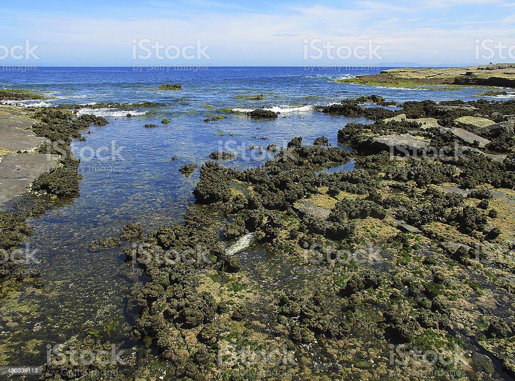 Intertidal rock platform stock photo