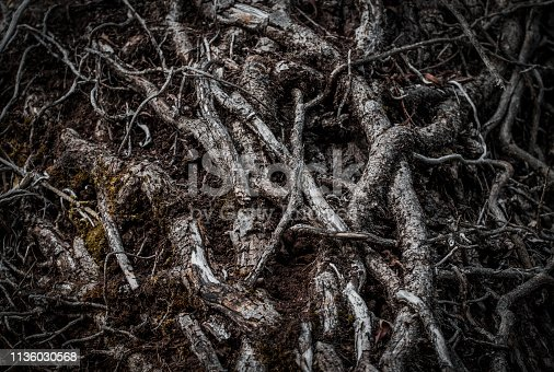 istock Intertwined roots of a tree in a dark forest. Selective focus. Dark mystery magical background 1136030568