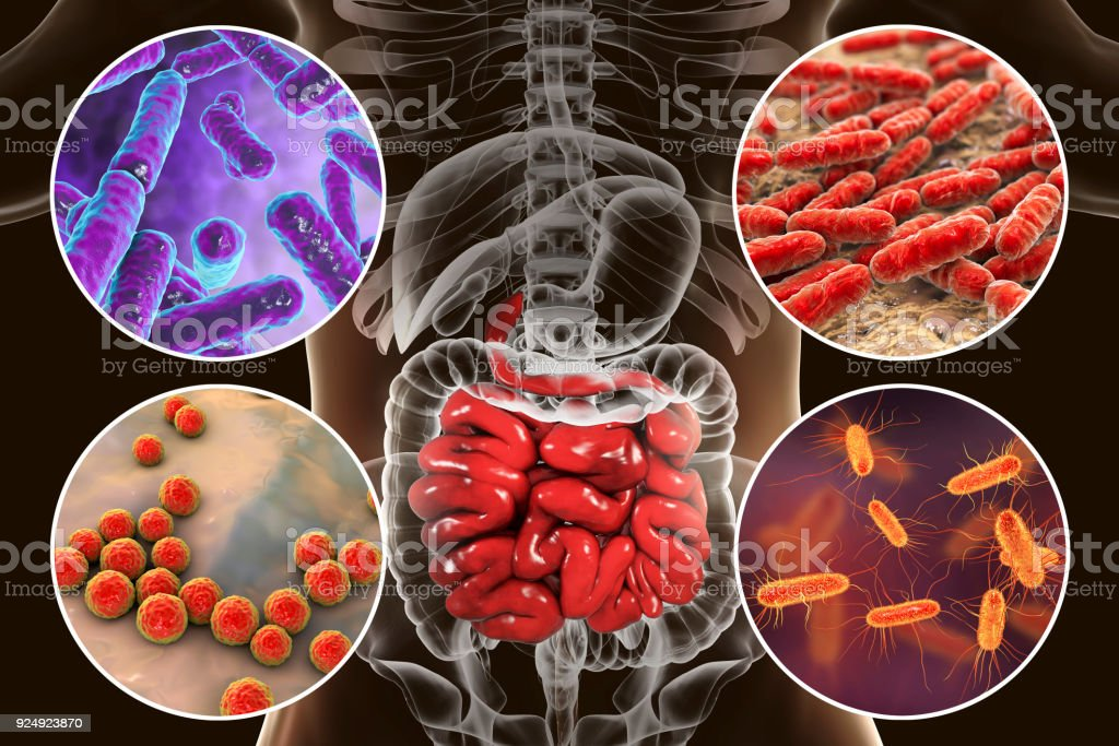 Intestinal microbiome, bacteria colonizing small intestine stock photo