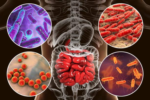 Intestinal microbiome, bacteria colonizing small intestine stock photo