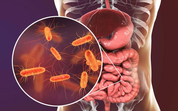Intestinal microbiome, Escherichia coli stock photo