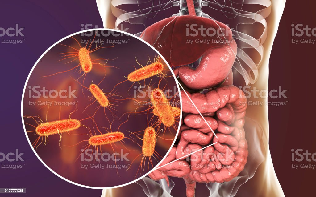 Intestinal microbiome, Escherichia coli stock photo