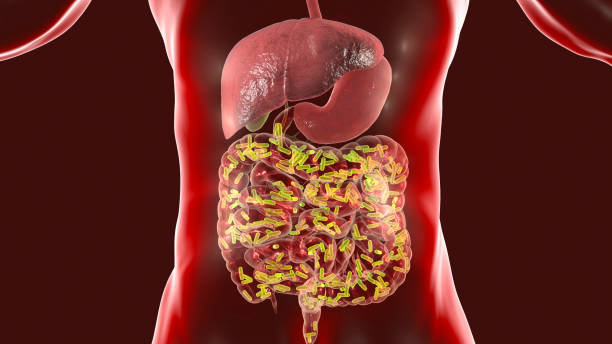 Intestinal microbiome, medical concept stock photo