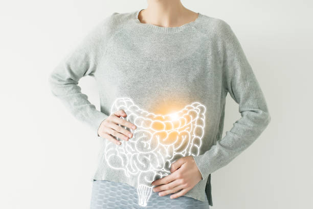 intestine visualisation on woman body Woman in casual grey clothes suffering from indigestion pain, highlighted vector visualisation of intestine lactobacillus stock pictures, royalty-free photos & images