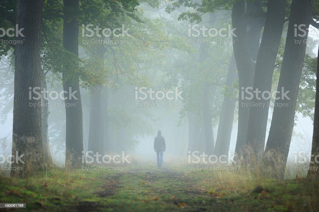 Dans la brume - Photo