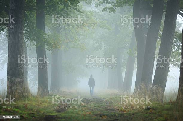 Photo of Into the fog