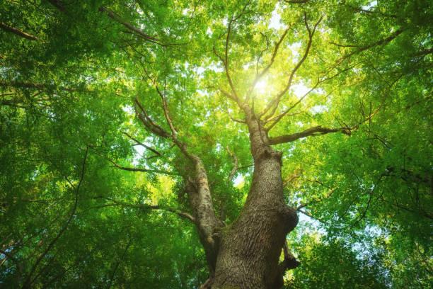 al bosque. - árbol fotografías e imágenes de stock