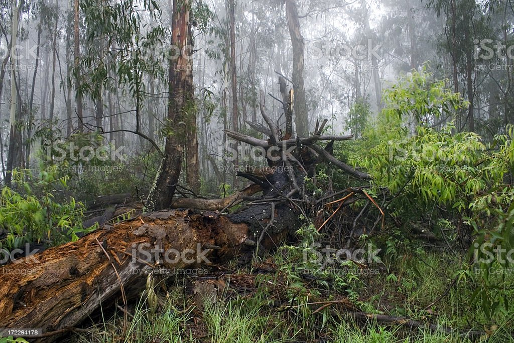 Into the forest royalty-free stock photo