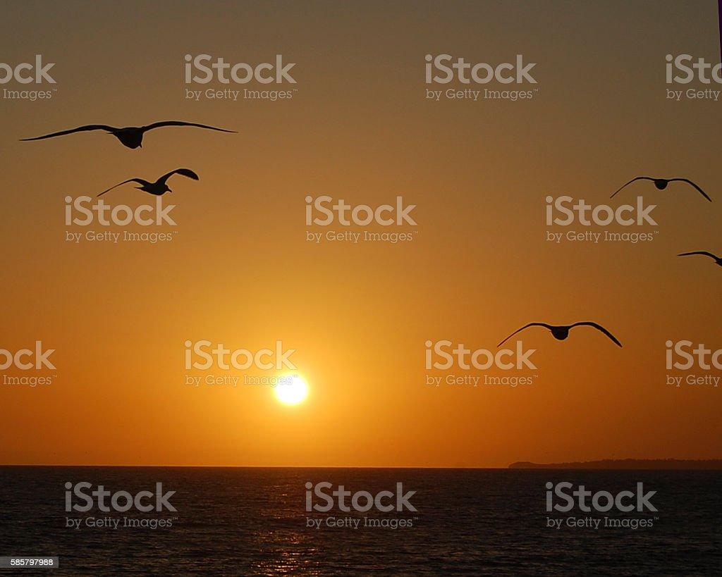 Into the setting sun Sea gulls flying into a setting sun. Horizontal Stock Photo