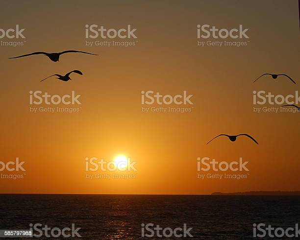 Into The Setting Sun Stock Photo - Download Image Now