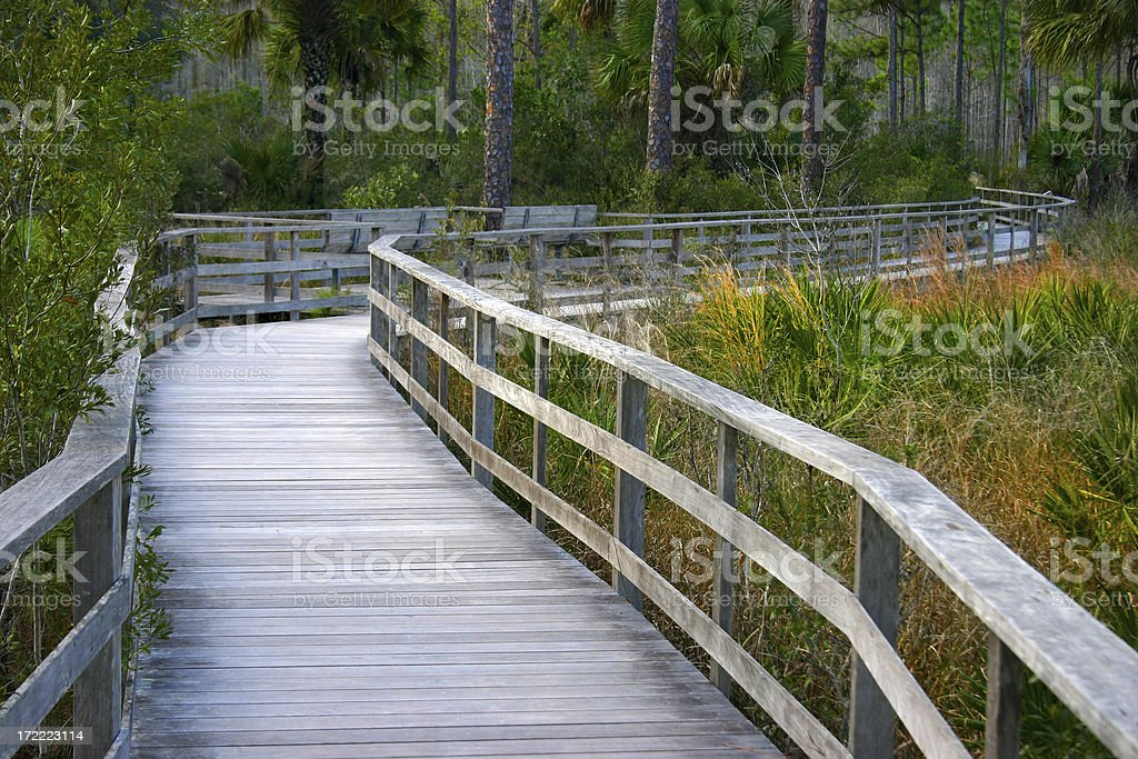 Into the Swamp royalty-free stock photo