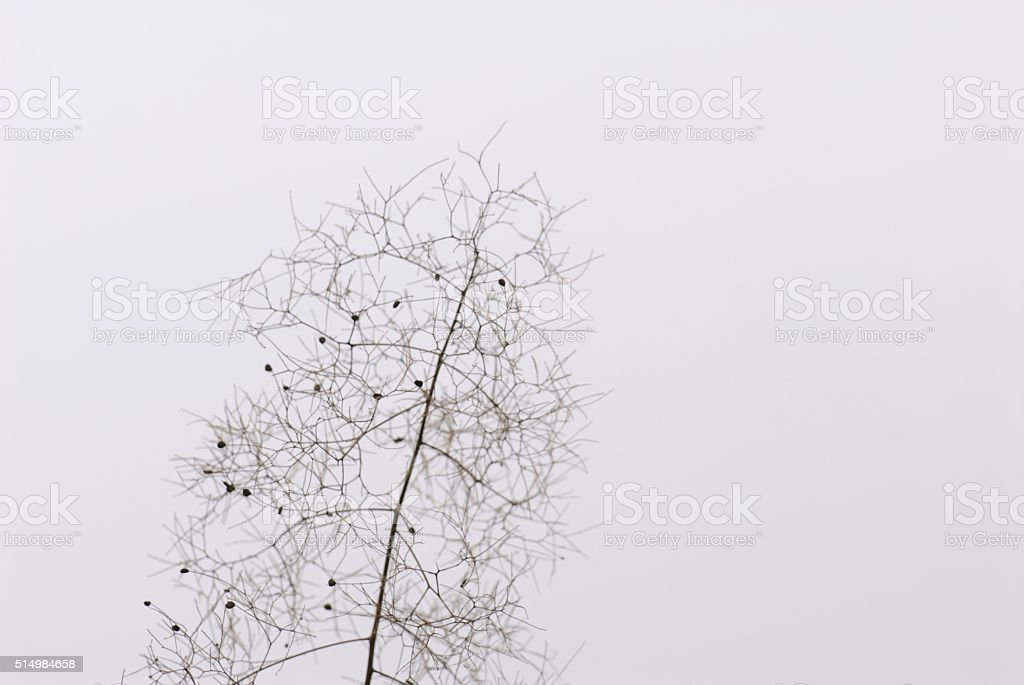 Into the winter, plants continue to give simple beauty stock photo
