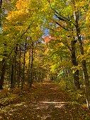 istock Into the woods 1281373129