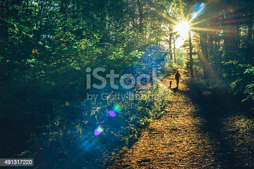 Boy walking with his dog in the woods into the sunset on a clear autumn day, natural lens flare, high ISO, toned image.