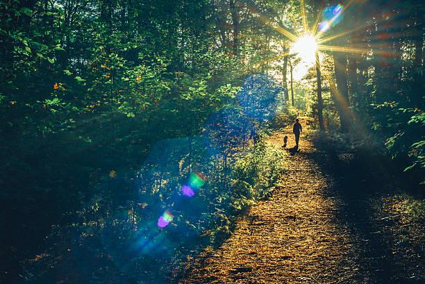 Into the woods picture id491317220?b=1&k=6&m=491317220&s=612x612&w=0&h= e3cr6mzmsq8gutpxvxymblon jfttzyd ejstjqcxc=