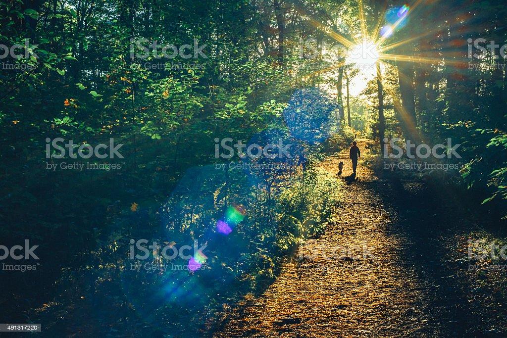In den Wald – Foto