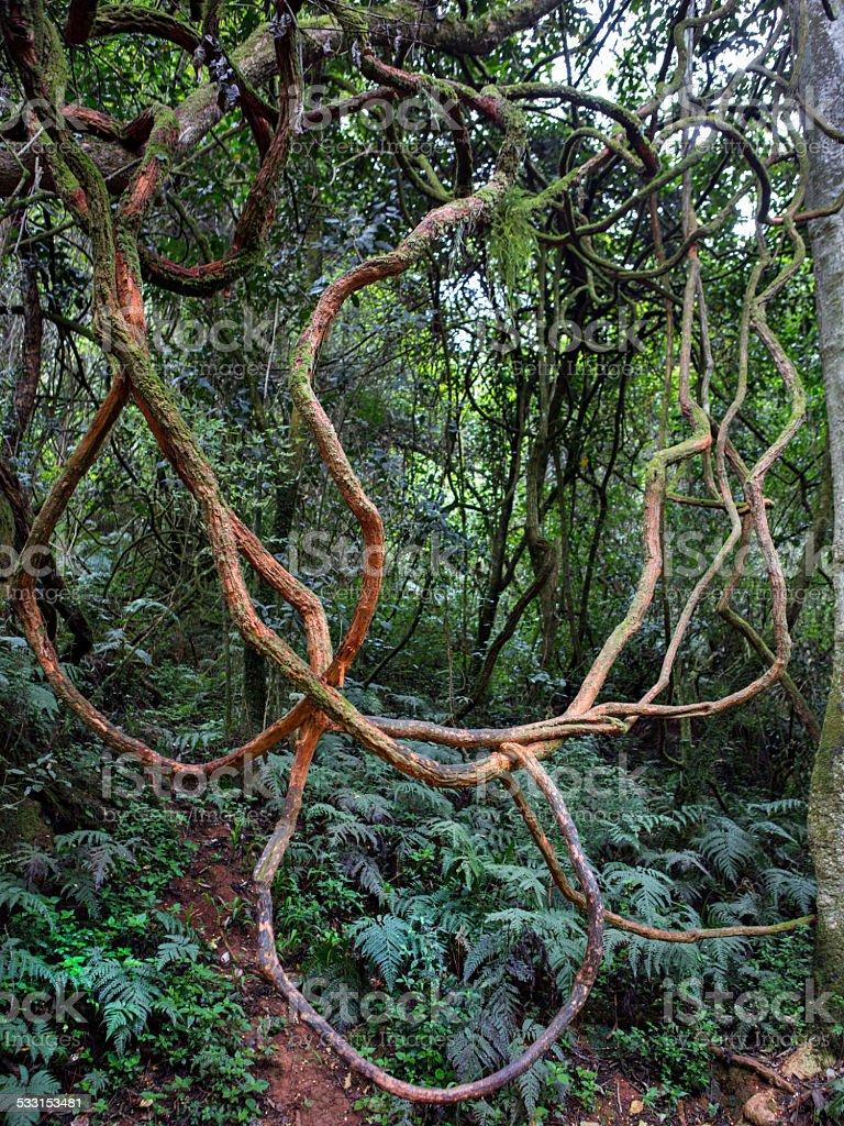 Intricate liana pattern stock photo