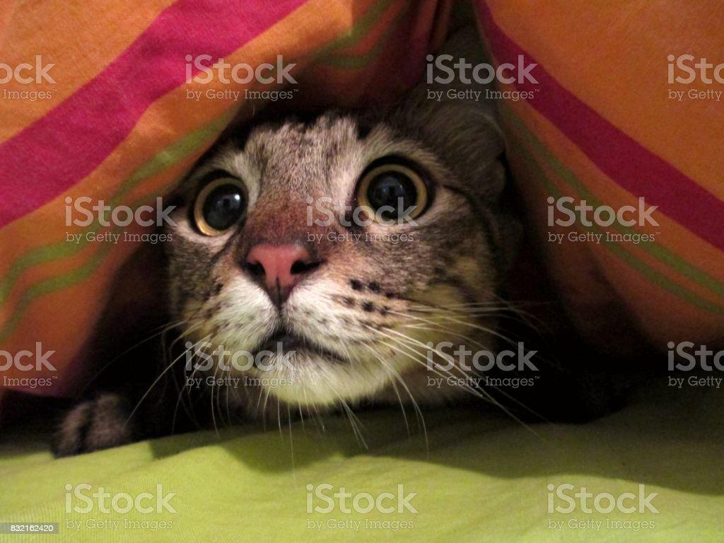 Intrigued Cat Under a Blanket - Стоковые фото Без людей роялти-фри