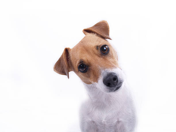 intrigued - animal head stock pictures, royalty-free photos & images