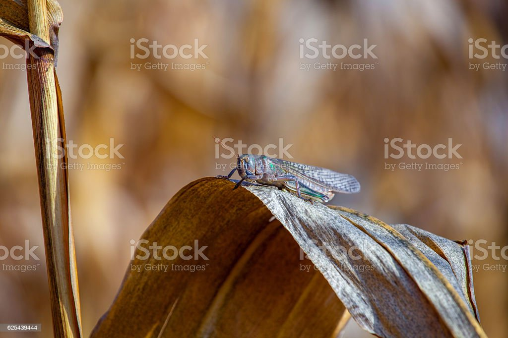 Invasion of insects, pest control in agriculture. stock photo