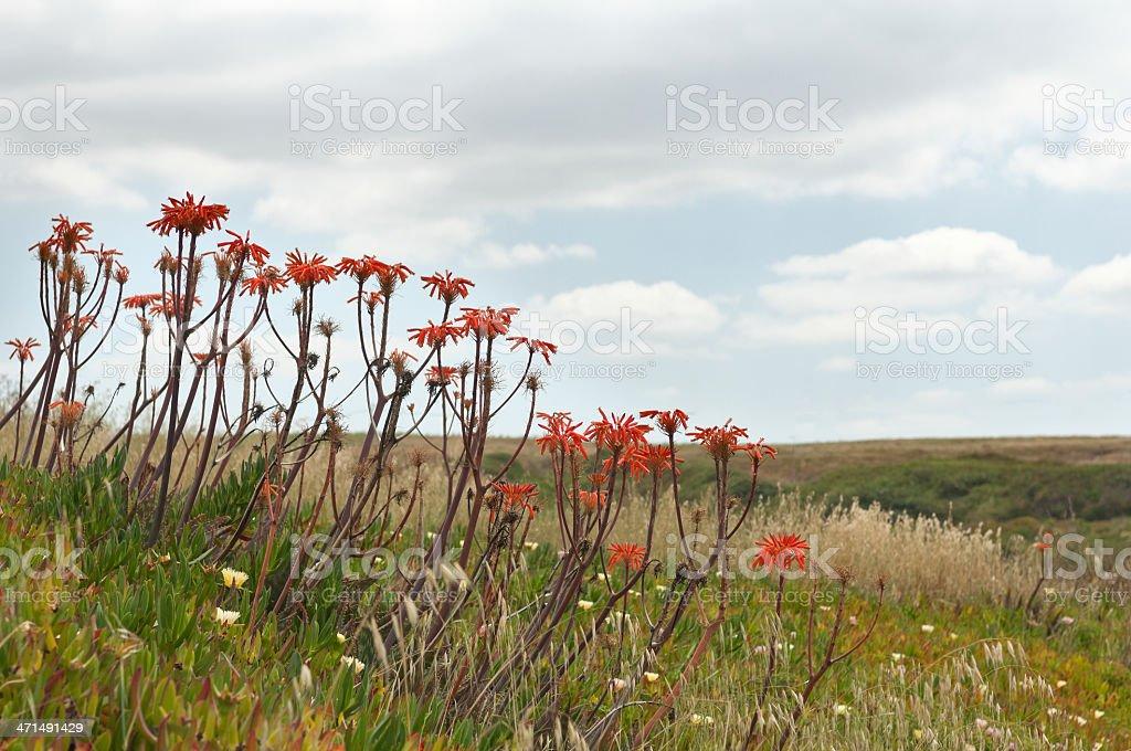 Invasive exotic plants royalty-free stock photo