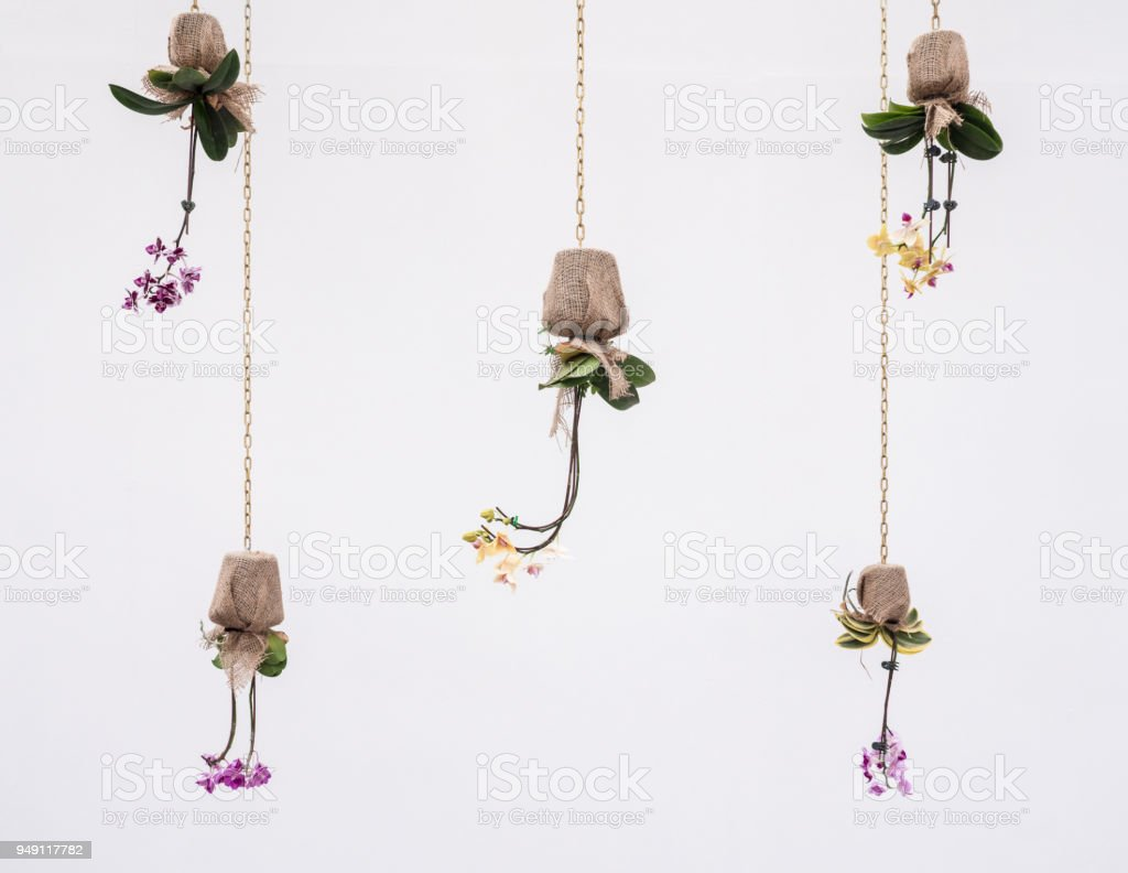 Inverse sackcloth pot with the beauty orchid. stock photo