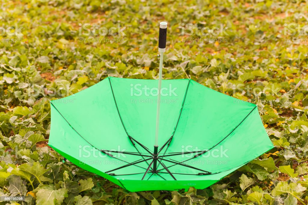 inverted green umbrella on the field stock photo