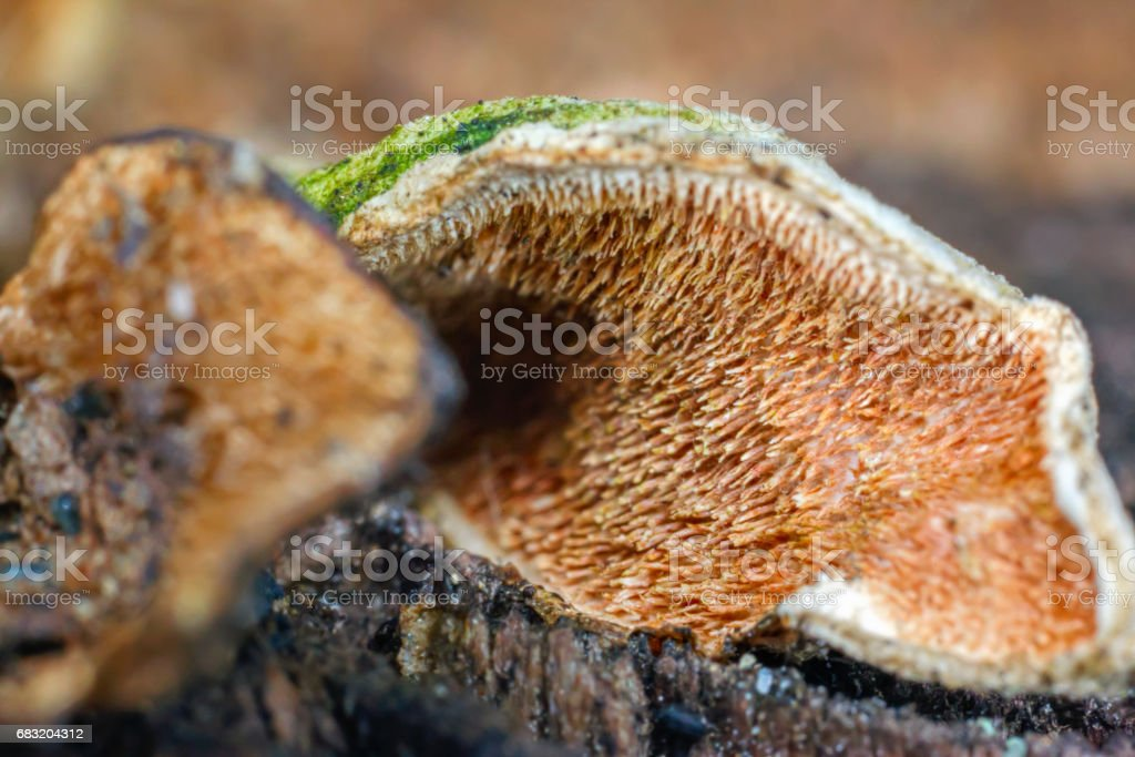 Invisible to the naked eye brush micro fungus foto de stock royalty-free