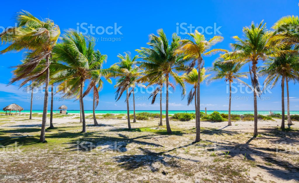 inviting, charming view of tropical palm garden leading to the beach and ocean stock photo