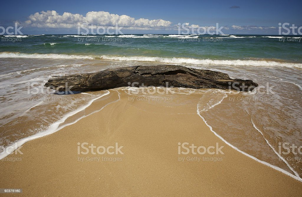 Inviting Tropical Shore royalty-free stock photo
