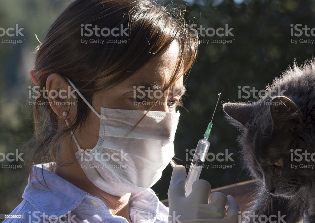 Inyectando a la Gata stock photo