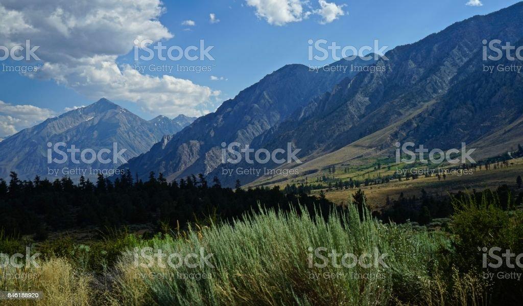 Inyo National Forest Sagebrush stock photo