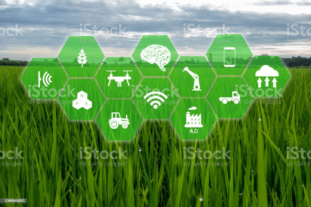 Iot Internet Of Thingsfarmer Agriculture Concept Smart Farm With