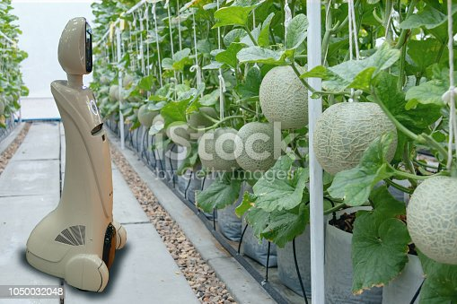 1022530858istockphoto iot smart farming, agriculture in industry 4.0 technology concept, trend robot using in farm to help farmer collect data ,keep , tracking, detect insect, feed fertilizer to improve the vegetable fruit 1050032048