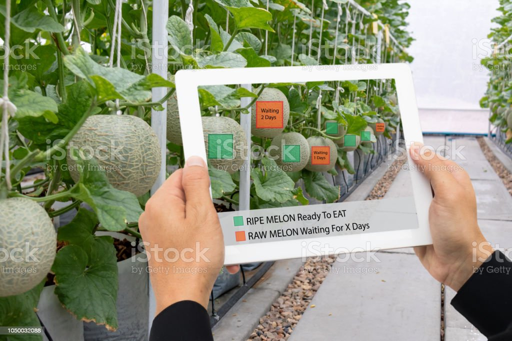 iot smart farming, agriculture industry 4.0 technology concept, farmer hold the tablet to use augmented mixed virtual reality software Artificial intelligence to detect and keep data in farm stock photo
