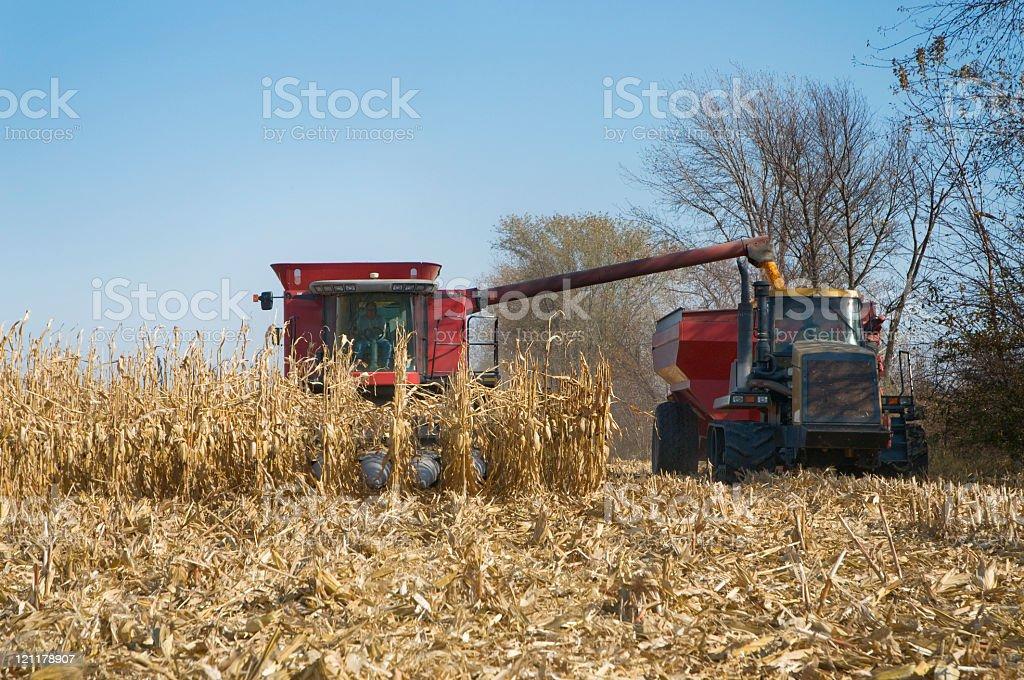 Iowa Corn Harvest stock photo